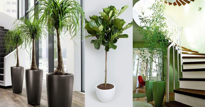 indoor plants collection stairs plant care experts in Canada Nova Scotia Halifax maritimes atlantic