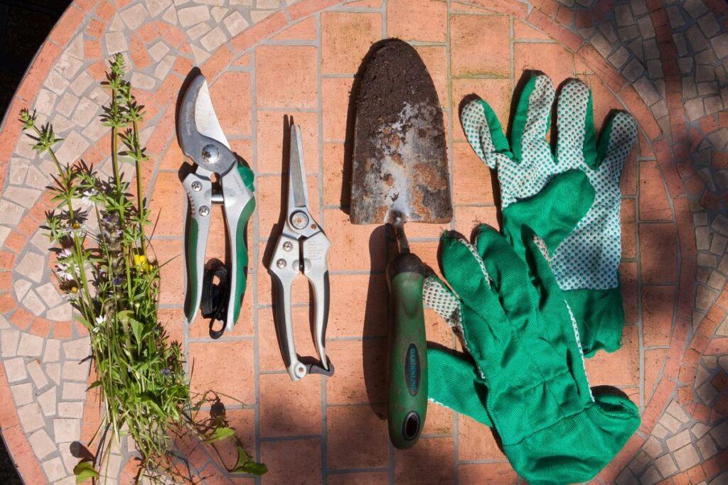 propagate Sansevieria snake plant