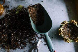 mix soil gardening repoting repotting