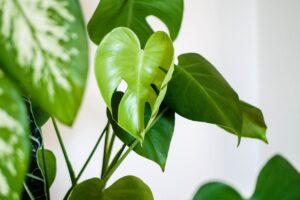 foliage plant green leaf